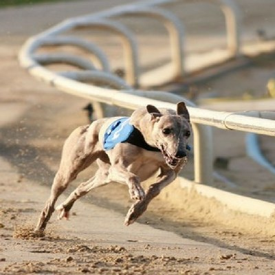hen party packages Ireland. dog races hen party